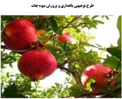 طرح توجیهی باغداری و پرورش میوه جات